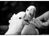 Animals 03